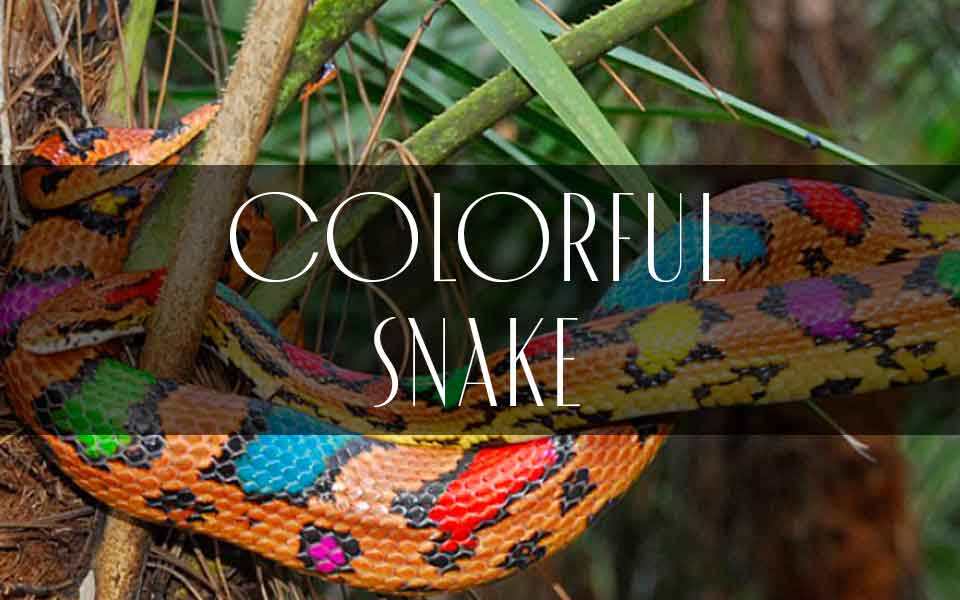 Footwear Trend SS21 - Colorful Snake